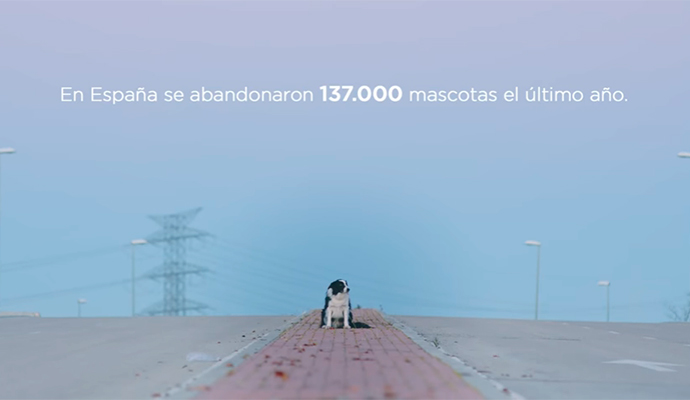 Street marketing contra el abandono de mascotas