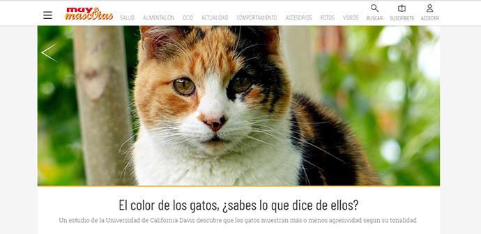 Las revistas españolas siguen creciendo en influencia omnicanal