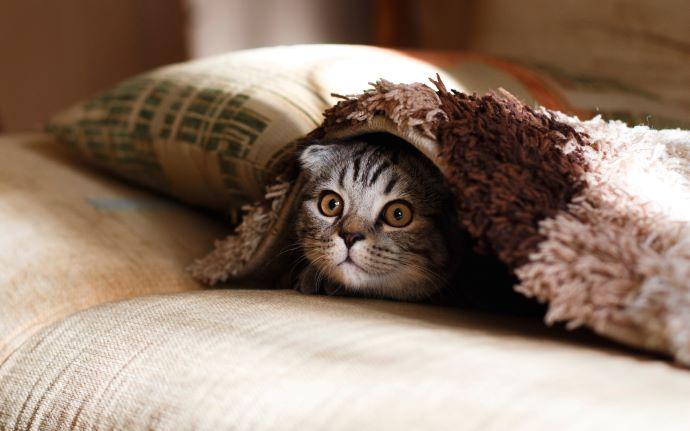 gato-perdido